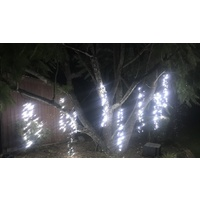 10M  Cool White LED Firecracker Curtain Light on a green wire